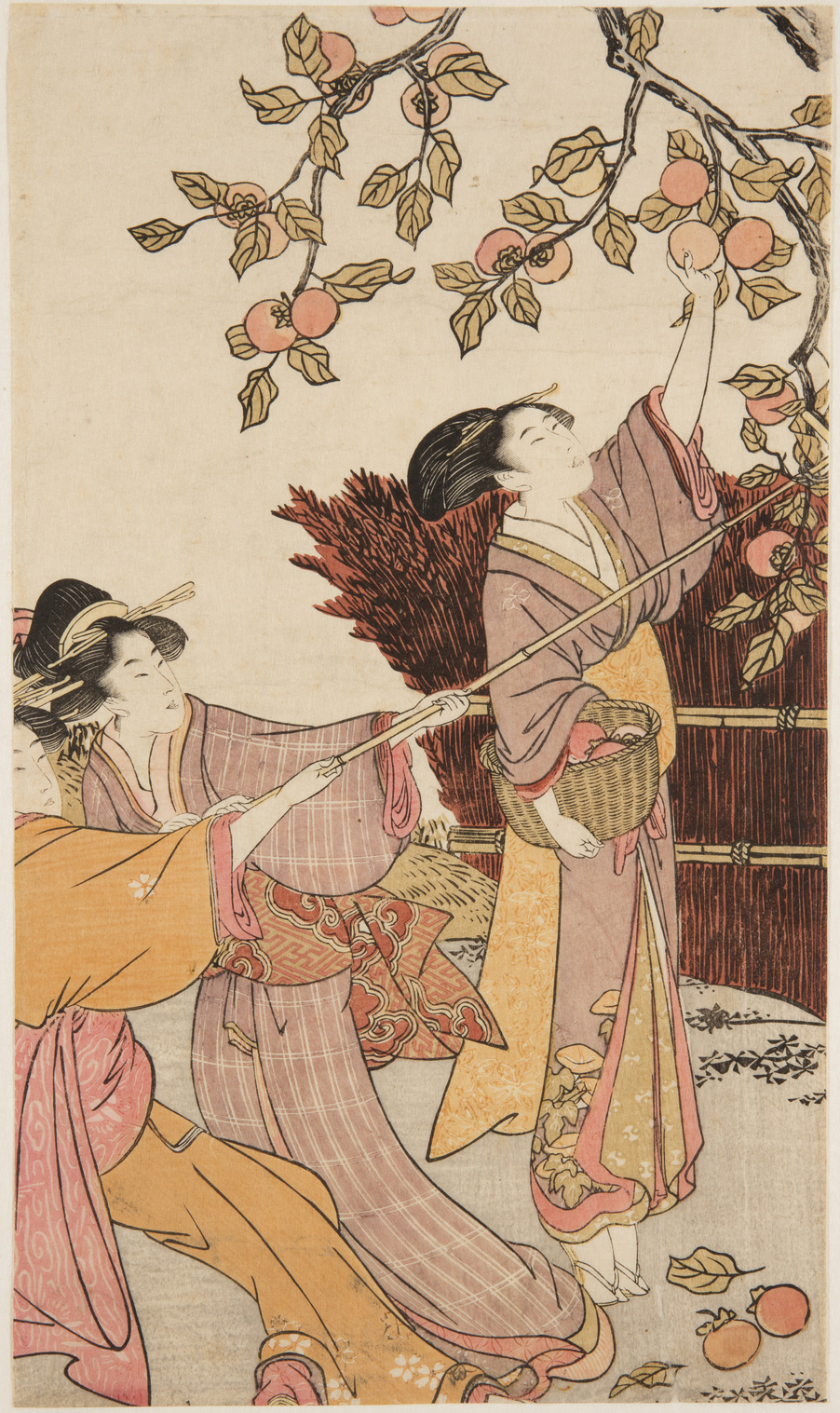 Japanese print of three men dressed in traditional clothes harvesting persimmon fruit from a tree, two pull the branches down and the other plucks the fruit from the tree.