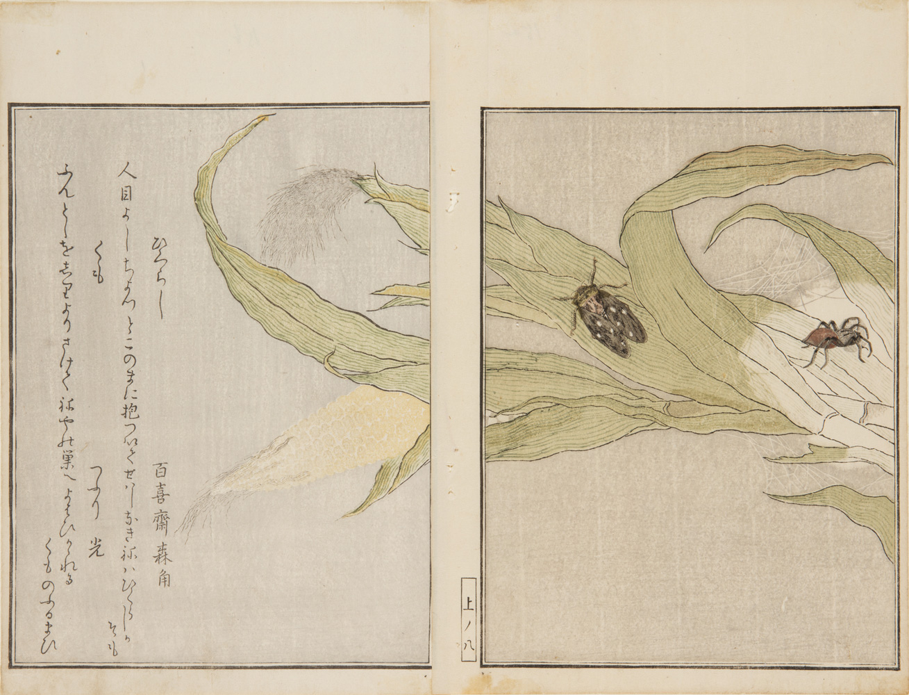 Japanese prints, pages of a book, showing detail of a plant with two bugs crawling on it.