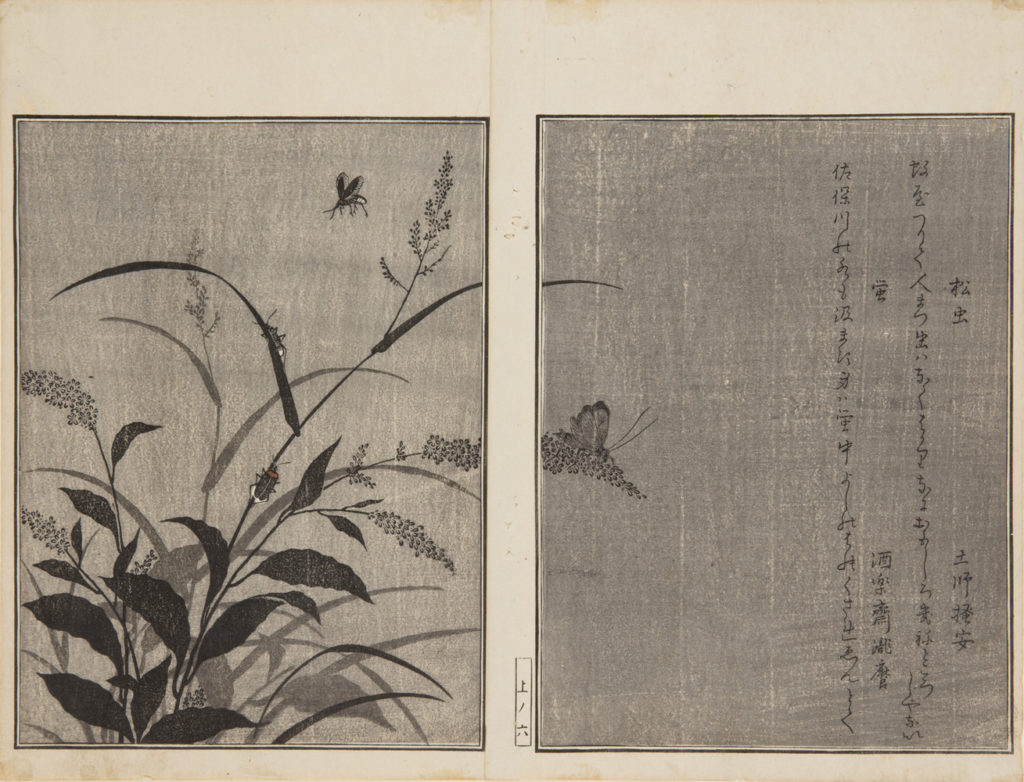Japanese prints, pages of a book, showing a close of plants with four butterflies and insects crawling on them.