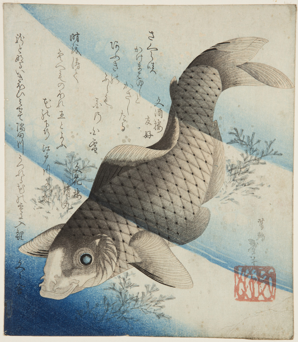 Japanese print of a large carp swimming through water and pond weed.