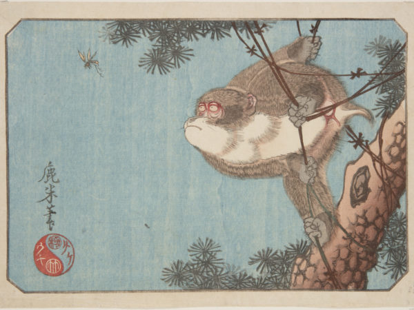 Japanese print of a monkey, in a tree, holding on to vines with its hands and feet, he looks intently at a flying insect.