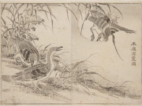 Japanese print of three geese, two on the ground and a third coming into land next to them.