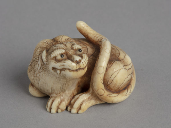 A Japanese ivory netsuke of a crouching tiger looking up and tail curled back along its body.