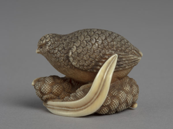 A Japanese ivory netsuke of a quail perched on two ears of millet and two long leaves.