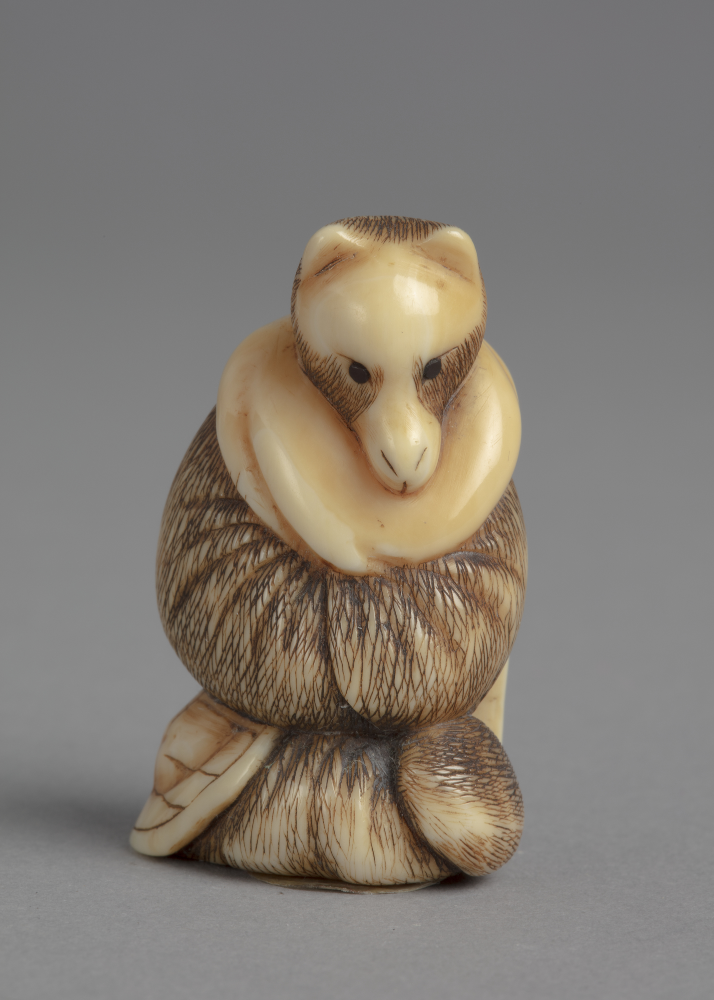 A Japanese ivory netsuke of a standing tanuki, a badger-like racoon native to Japan. It wears thick winter robes.