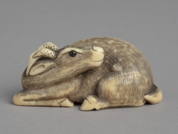 A Japanese ivory netsuke of a recumbent deer with its head turned back along the left side of its body. Eyes inlay with jet.