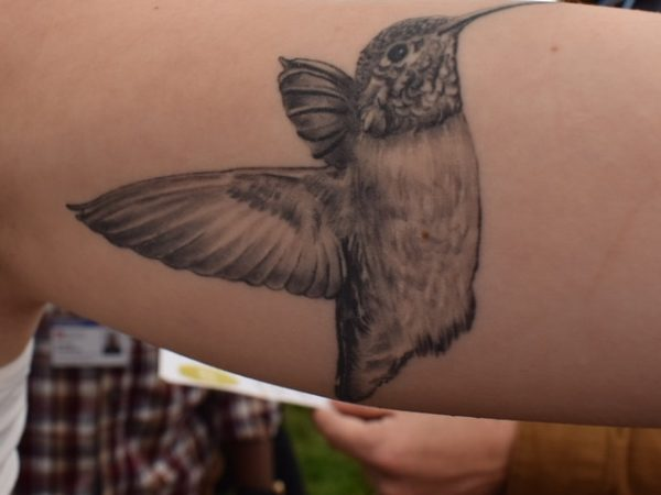 a detailed black and white hummingbird tattoo on a forearm