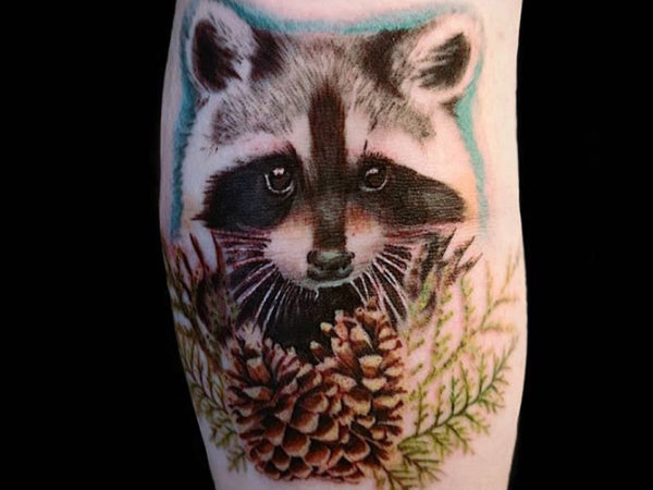 Realistic raccoon tattoo in colour, below the raccoon are pine cones and pine leaves